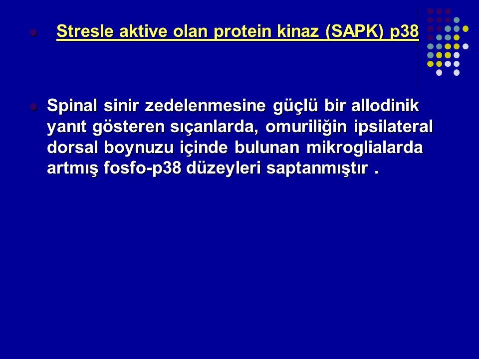 Stresle aktive olan protein kinaz (SAPK) p38