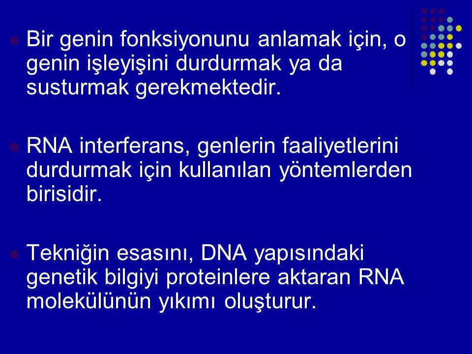 Bir genin fonksiyonunu anlamak için, o genin işleyişini durdurmak ya da susturmak gerekmektedir.