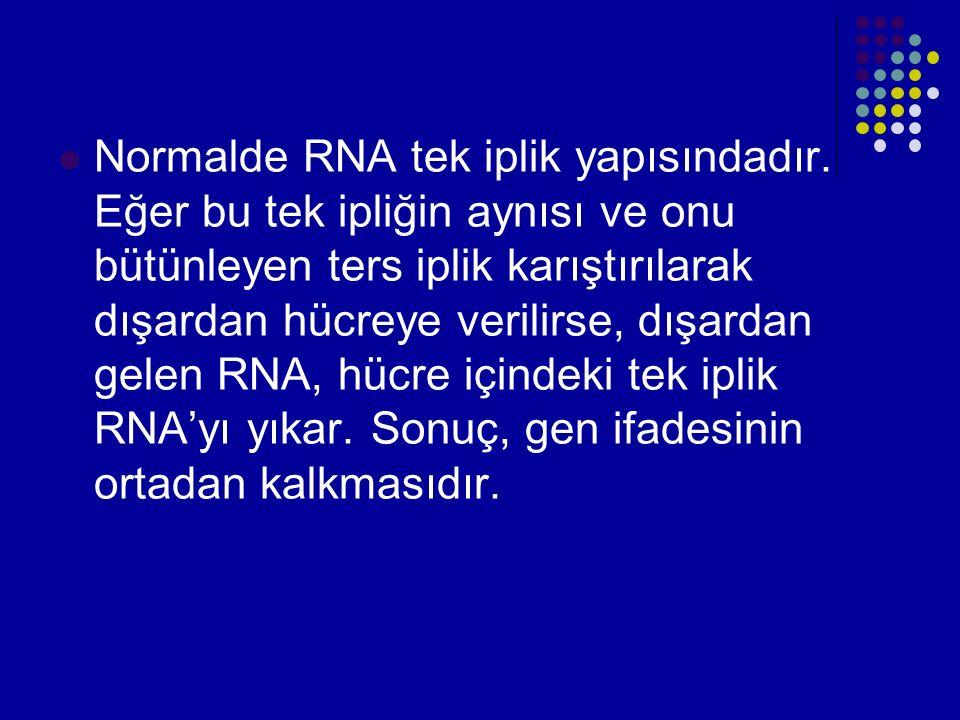 Normalde RNA tek iplik yapısındadır