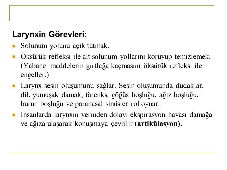 Larynxin Görevleri: Solunum yolunu açık tutmak.