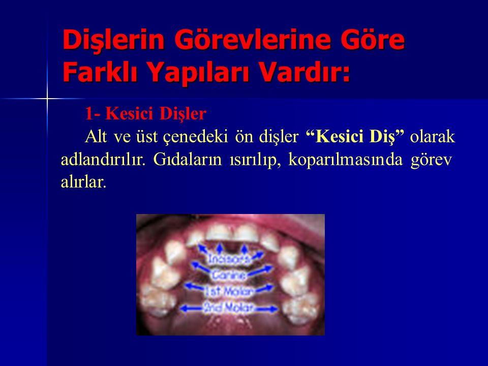 Dişlerin Görevlerine Göre Farklı Yapıları Vardır: