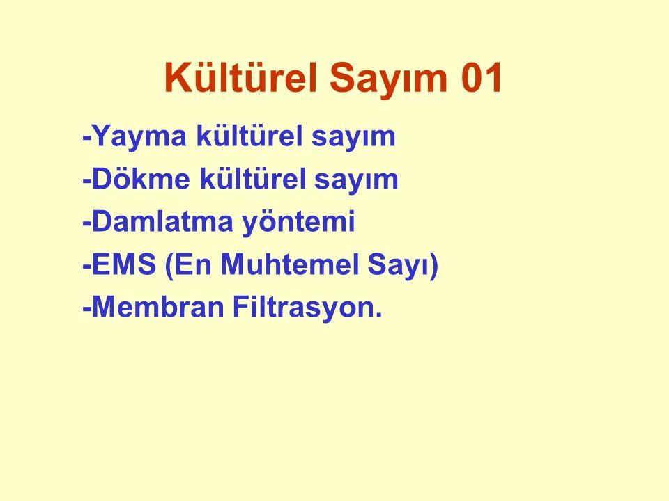 Kültürel Sayım 01 -Yayma kültürel sayım -Dökme kültürel sayım