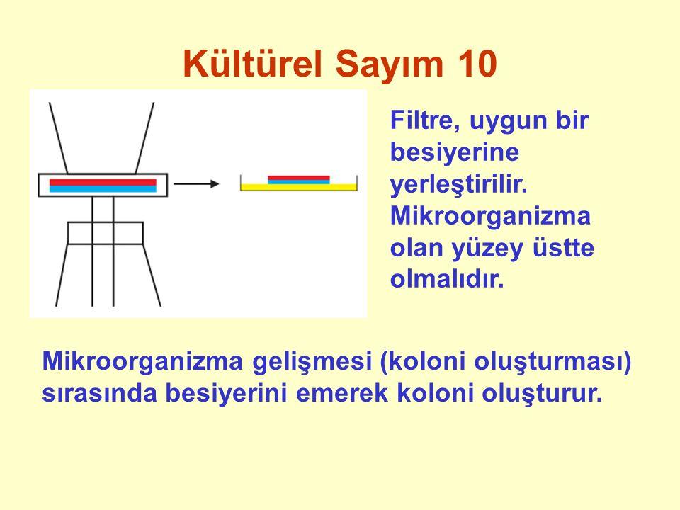 Kültürel Sayım 10 Filtre, uygun bir besiyerine yerleştirilir. Mikroorganizma olan yüzey üstte olmalıdır.
