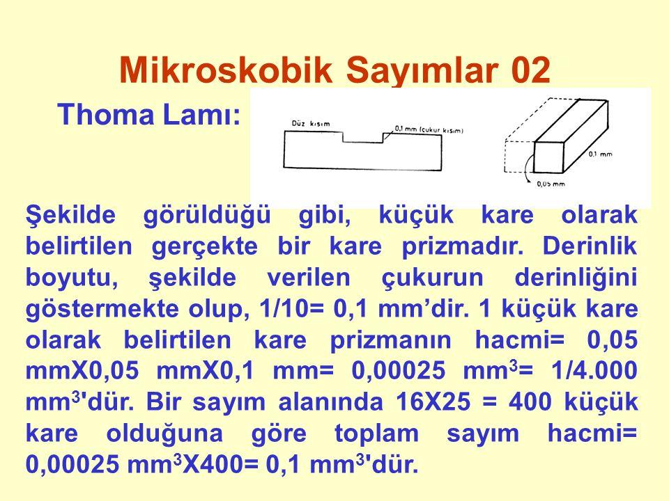 Mikroskobik Sayımlar 02 Thoma Lamı: