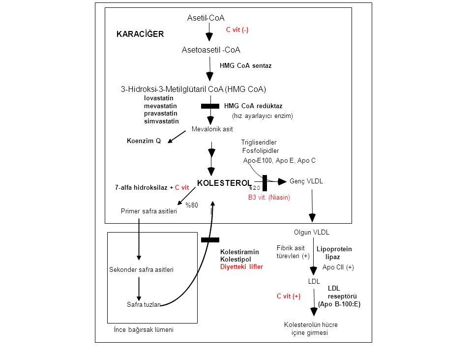 Metilglütaril CoA (HMG CoA) KARACİĞER
