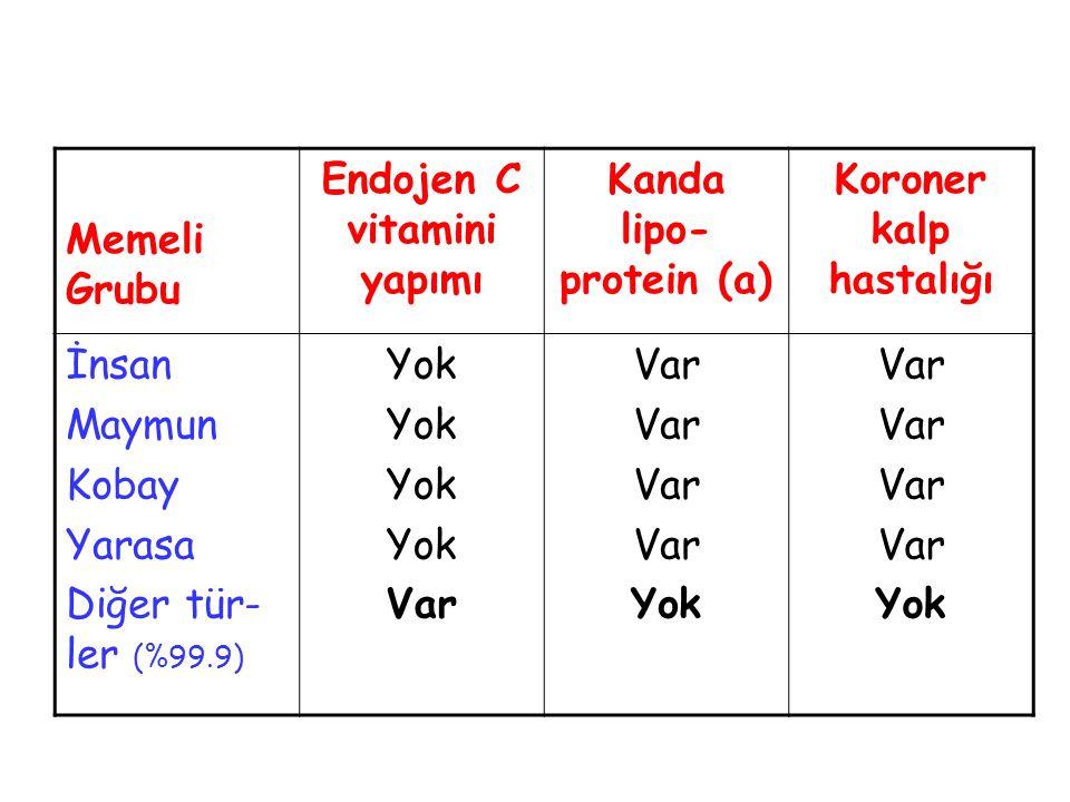 Endojen C vitamini yapımı Kanda lipo-protein (a)
