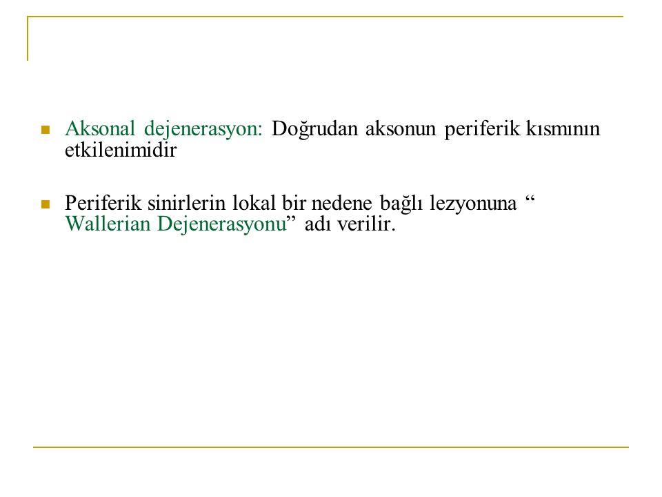 Aksonal dejenerasyon: Doğrudan aksonun periferik kısmının etkilenimidir