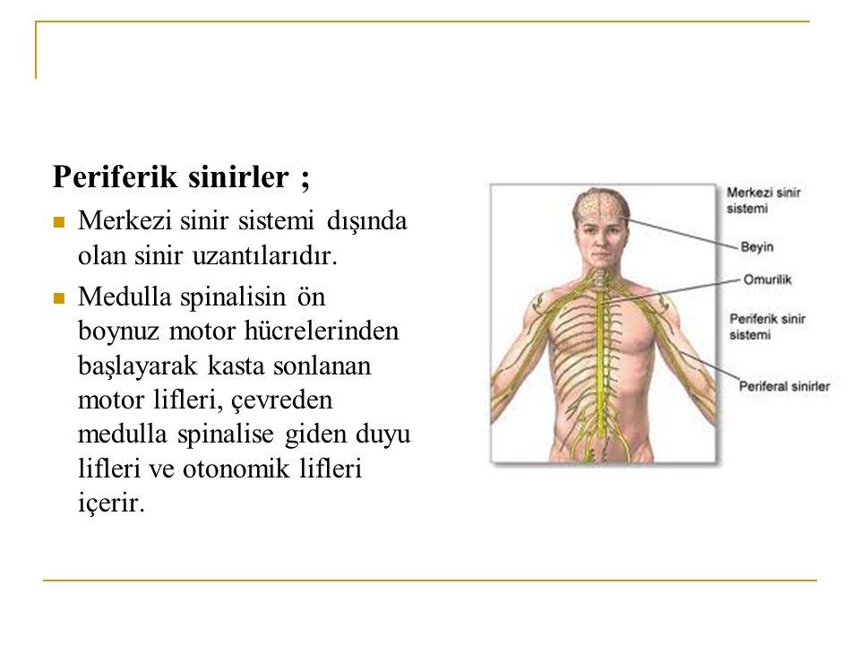Periferik sinirler ; Merkezi sinir sistemi dışında olan sinir uzantılarıdır.