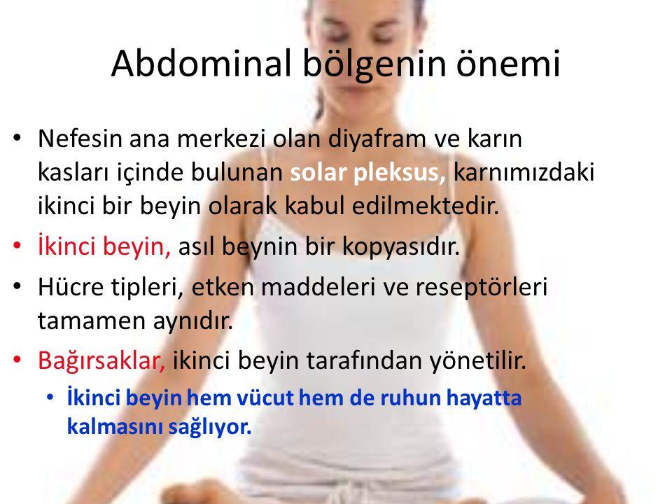 Abdominal bölgenin önemi