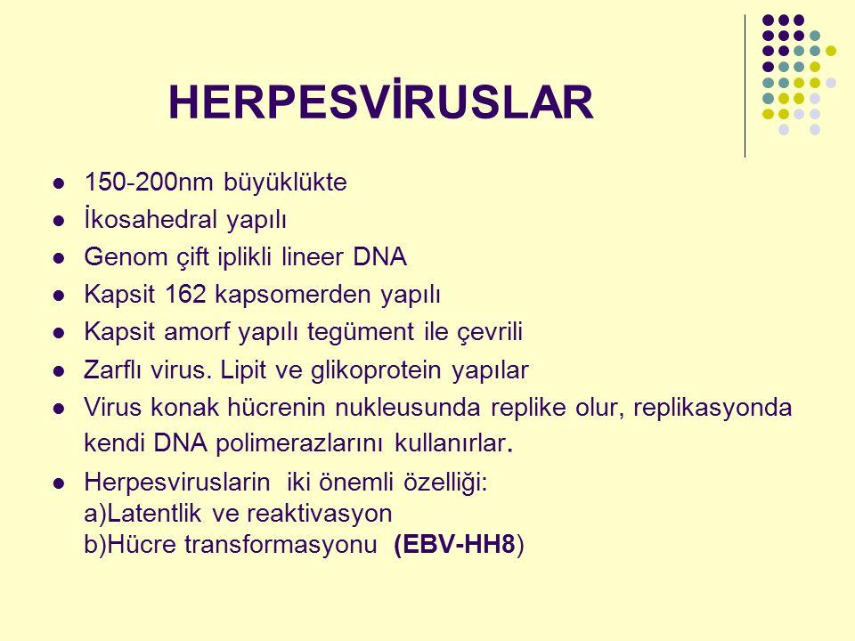 HERPESVİRUSLAR 150-200nm büyüklükte İkosahedral yapılı