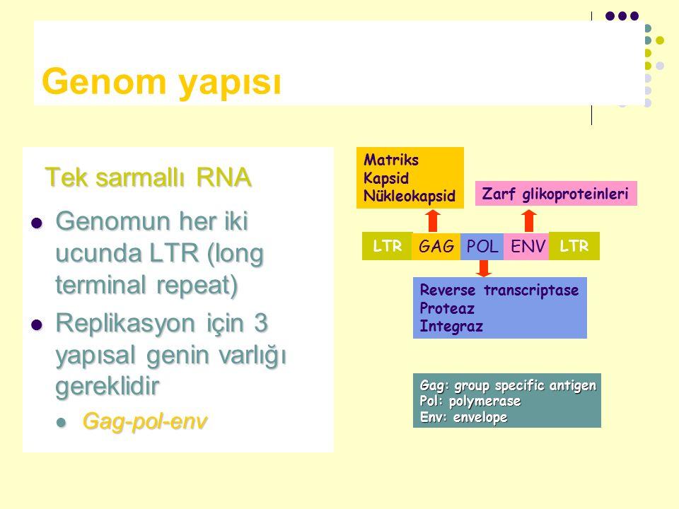 Genom yapısı Tek sarmallı RNA