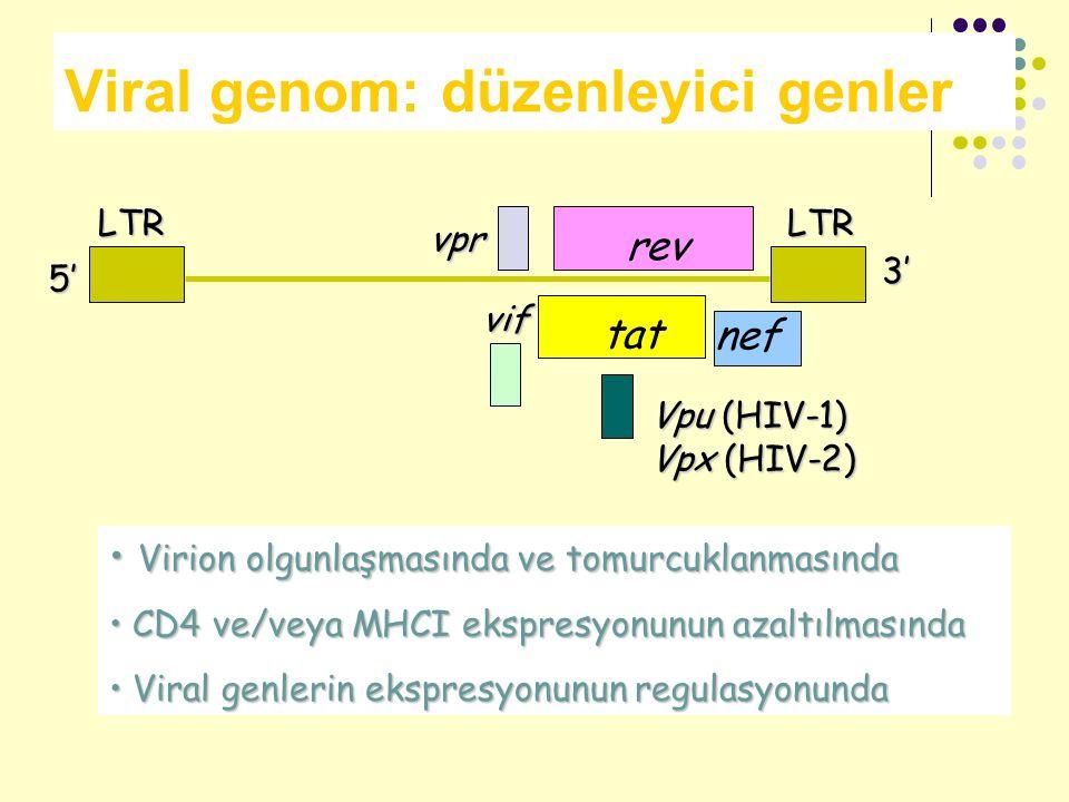 Viral genom: düzenleyici genler