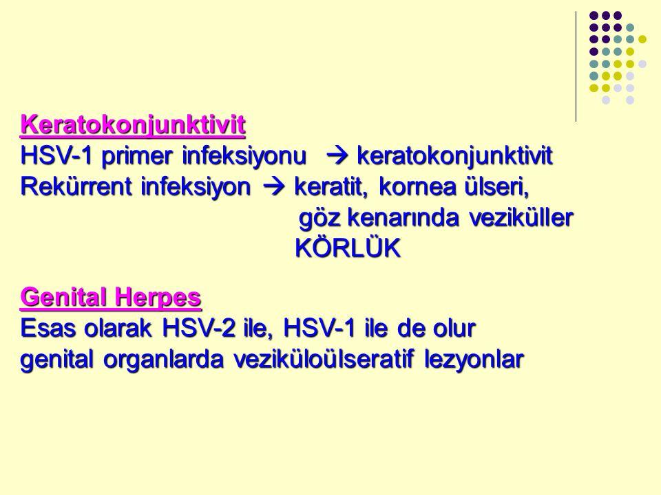 Keratokonjunktivit HSV-1 primer infeksiyonu  keratokonjunktivit. Rekürrent infeksiyon  keratit, kornea ülseri,