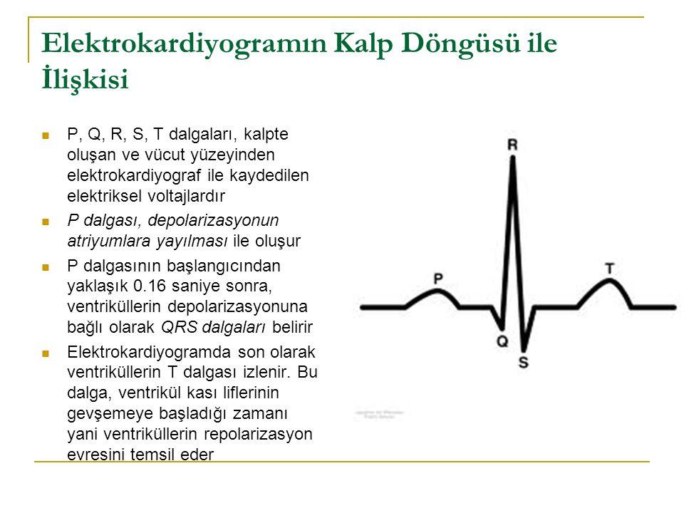 Elektrokardiyogramın Kalp Döngüsü ile İlişkisi