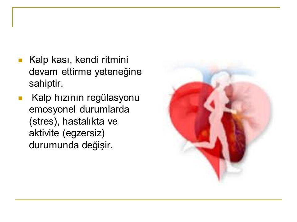 Kalp kası, kendi ritmini devam ettirme yeteneğine sahiptir.