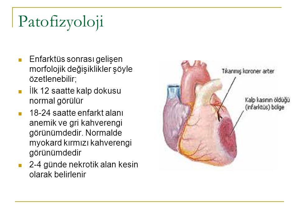 Patofizyoloji Enfarktüs sonrası gelişen morfolojik değişiklikler şöyle özetlenebilir; İlk 12 saatte kalp dokusu normal görülür.