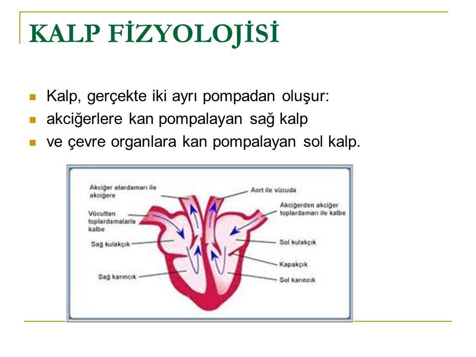 KALP FİZYOLOJİSİ Kalp, gerçekte iki ayrı pompadan oluşur: