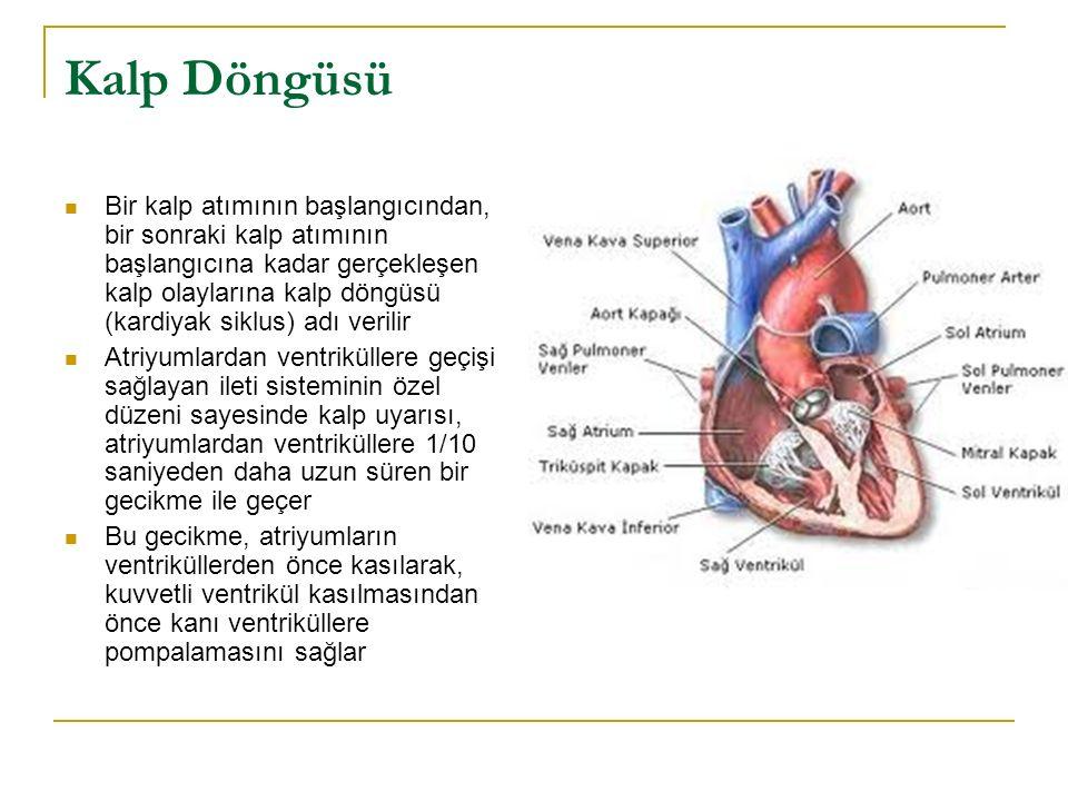 Kalp Döngüsü