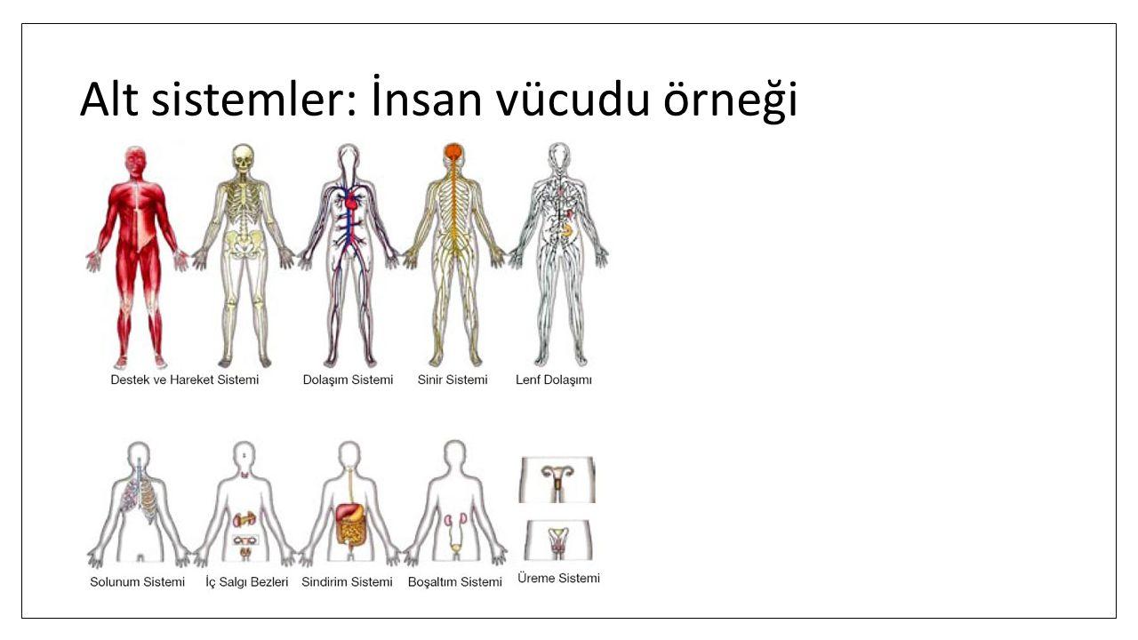 Alt sistemler: İnsan vücudu örneği