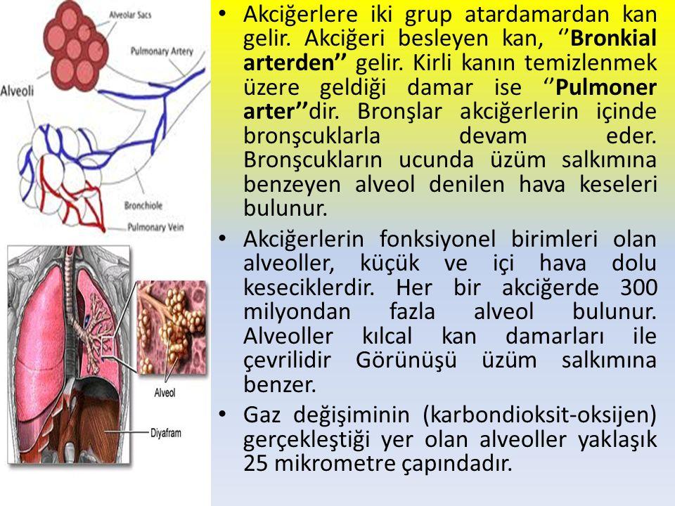 Akciğerlere iki grup atardamardan kan gelir