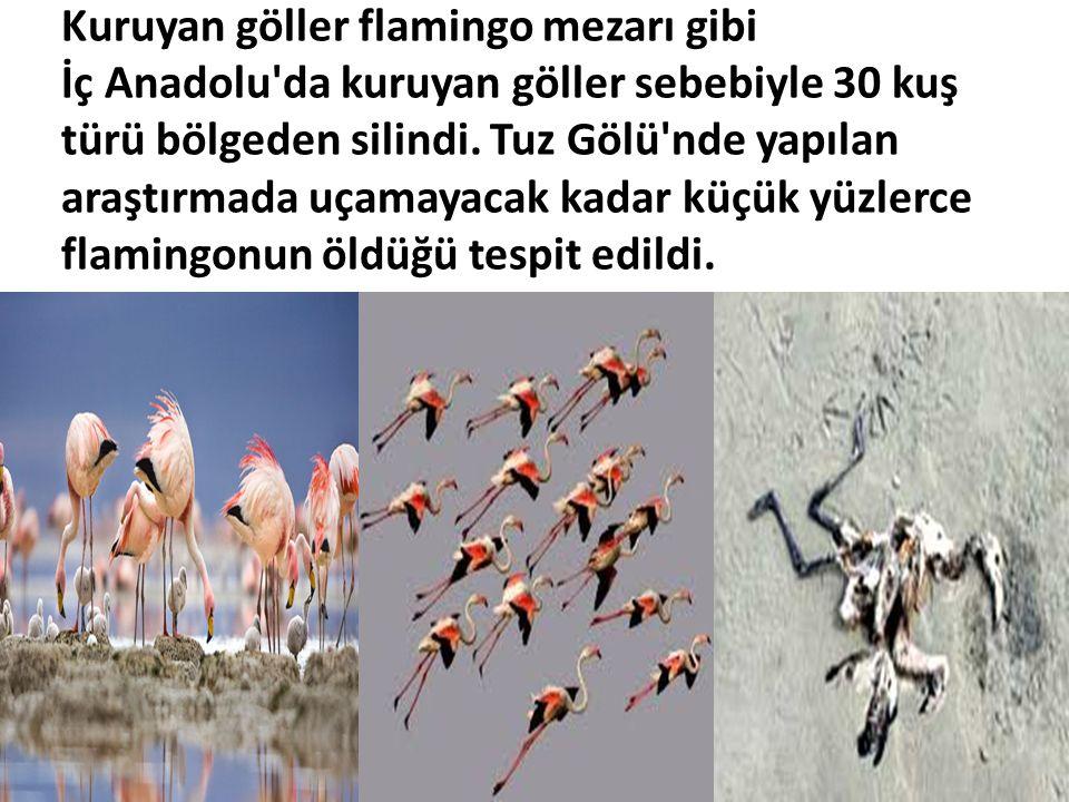 Kuruyan göller flamingo mezarı gibi İç Anadolu da kuruyan göller sebebiyle 30 kuş türü bölgeden silindi.