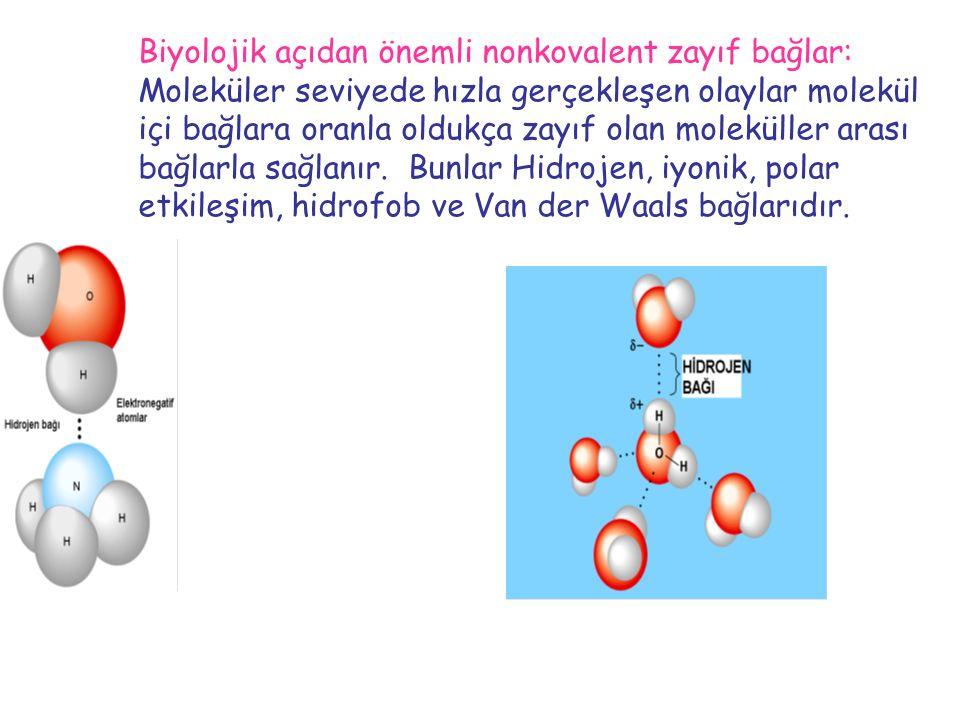 Biyolojik açıdan önemli nonkovalent zayıf bağlar: Moleküler seviyede hızla gerçekleşen olaylar molekül içi bağlara oranla oldukça zayıf olan moleküller arası bağlarla sağlanır.