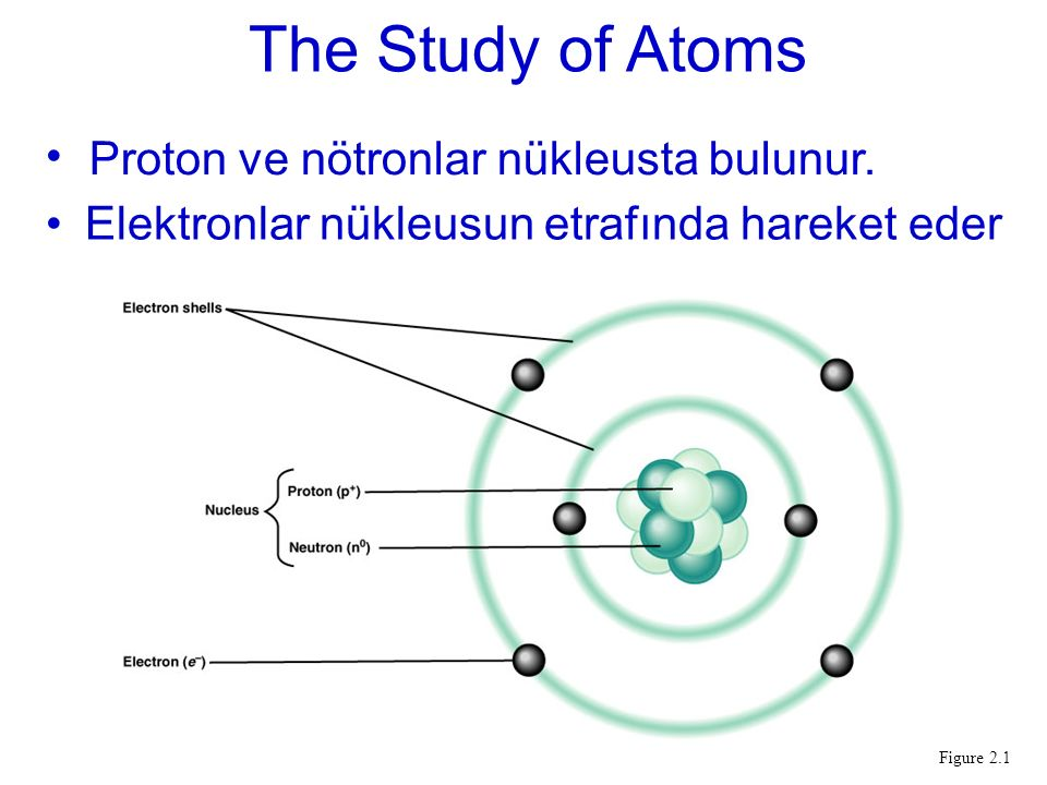 The Study of Atoms Protons and neutrons are in the nucleus.