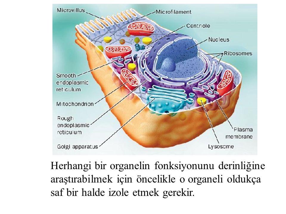 Herhangi bir organelin fonksiyonunu derinliğine araştırabilmek için öncelikle o organeli oldukça saf bir halde izole etmek gerekir.