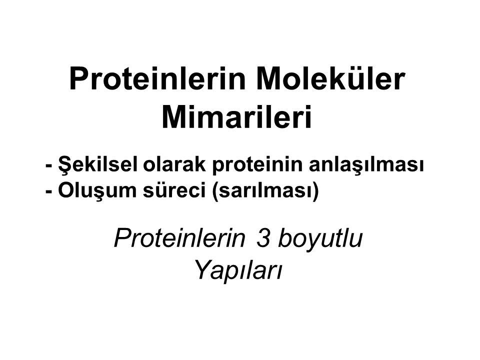 Proteinlerin Moleküler Mimarileri