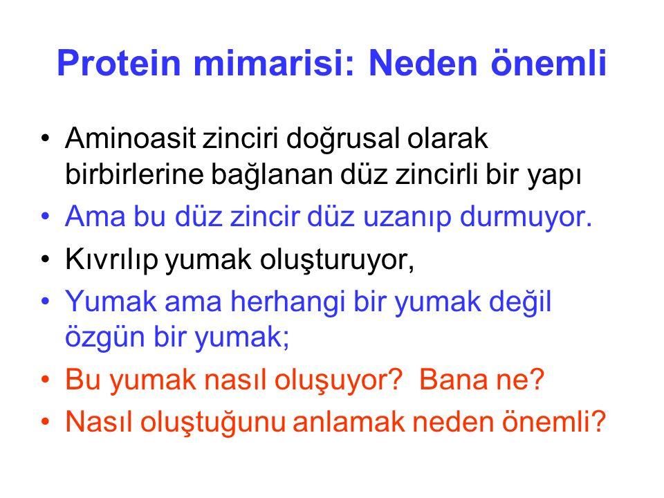 Protein mimarisi: Neden önemli