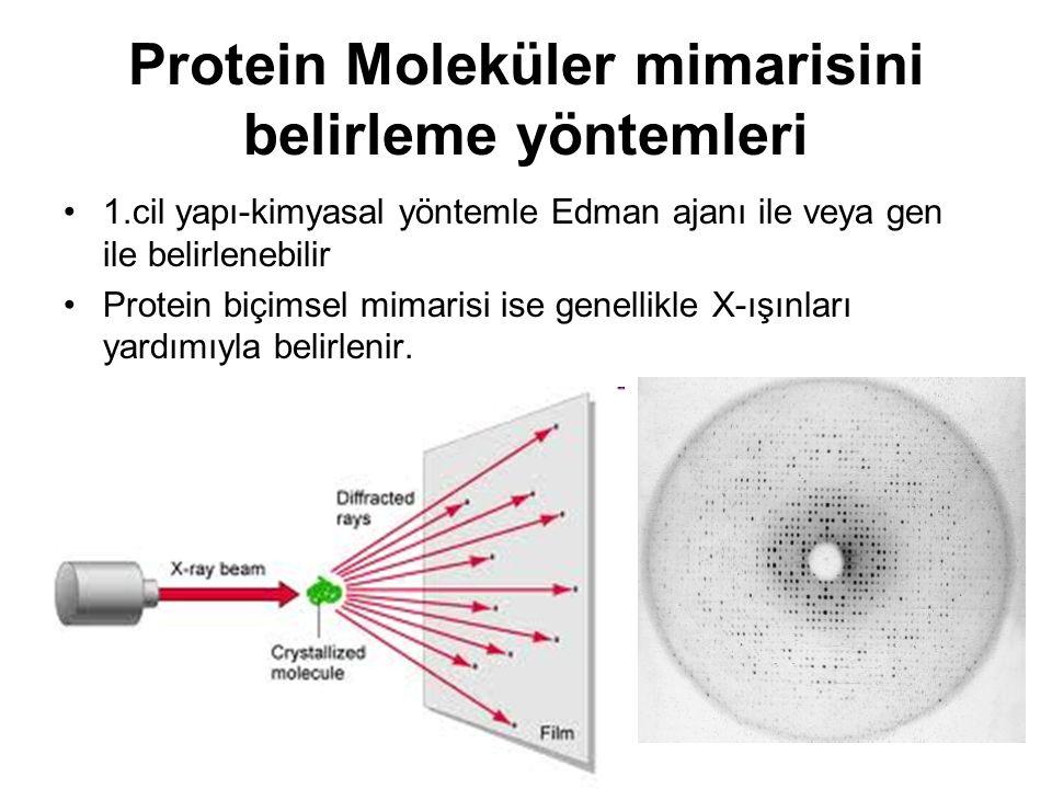 Protein Moleküler mimarisini belirleme yöntemleri