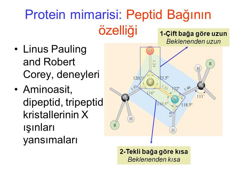 Protein mimarisi: Peptid Bağının özelliği