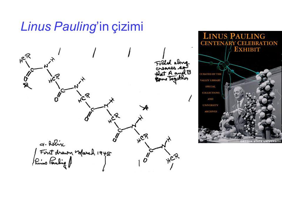 Linus Pauling'in çizimi
