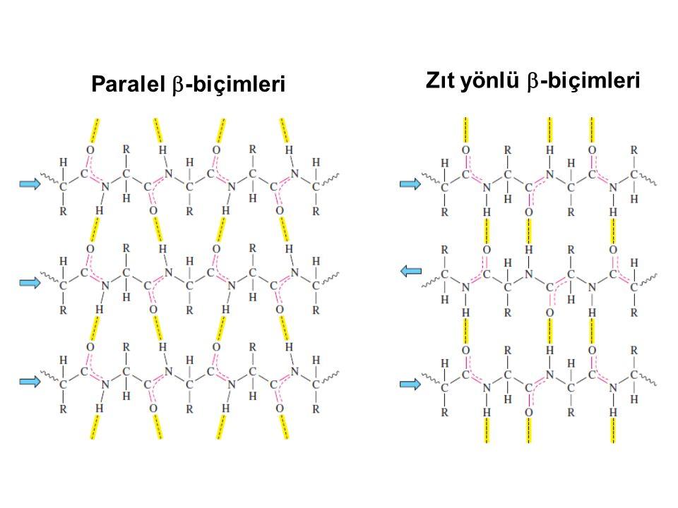 Paralel -biçimleri Zıt yönlü -biçimleri