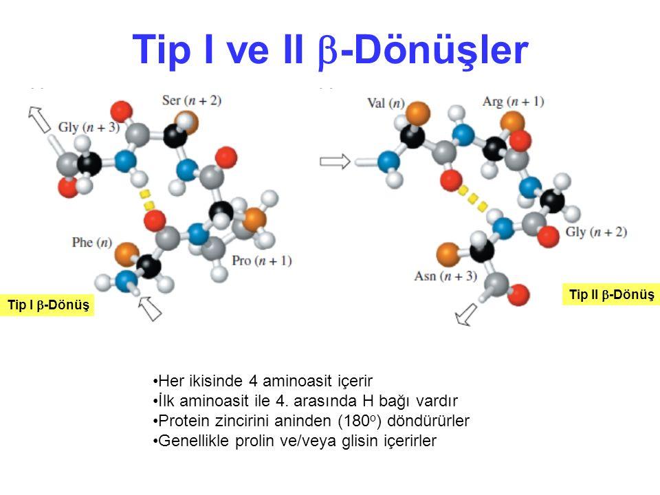Tip I ve II -Dönüşler Her ikisinde 4 aminoasit içerir
