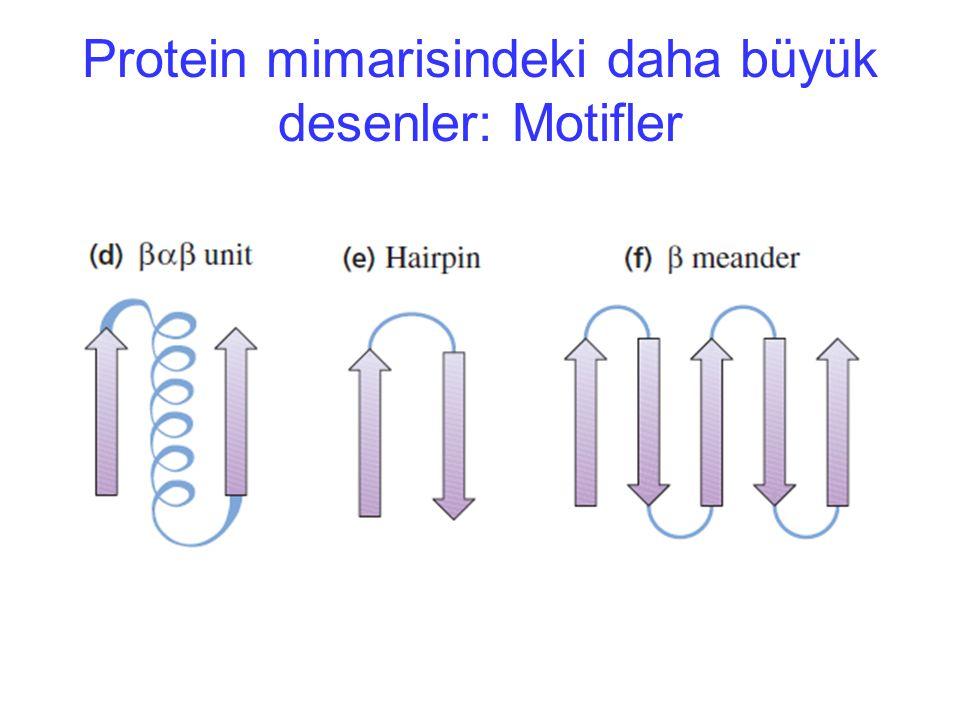 Protein mimarisindeki daha büyük desenler: Motifler