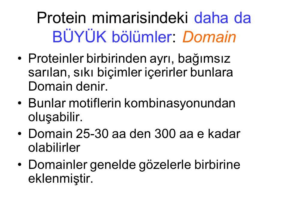 Protein mimarisindeki daha da BÜYÜK bölümler: Domain