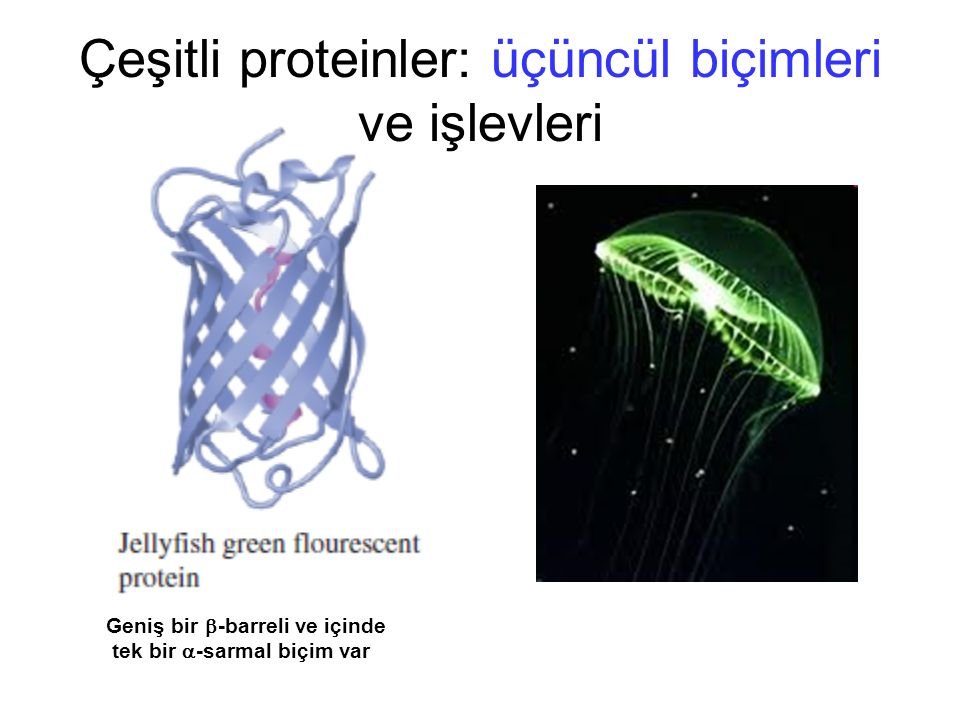 Çeşitli proteinler: üçüncül biçimleri ve işlevleri