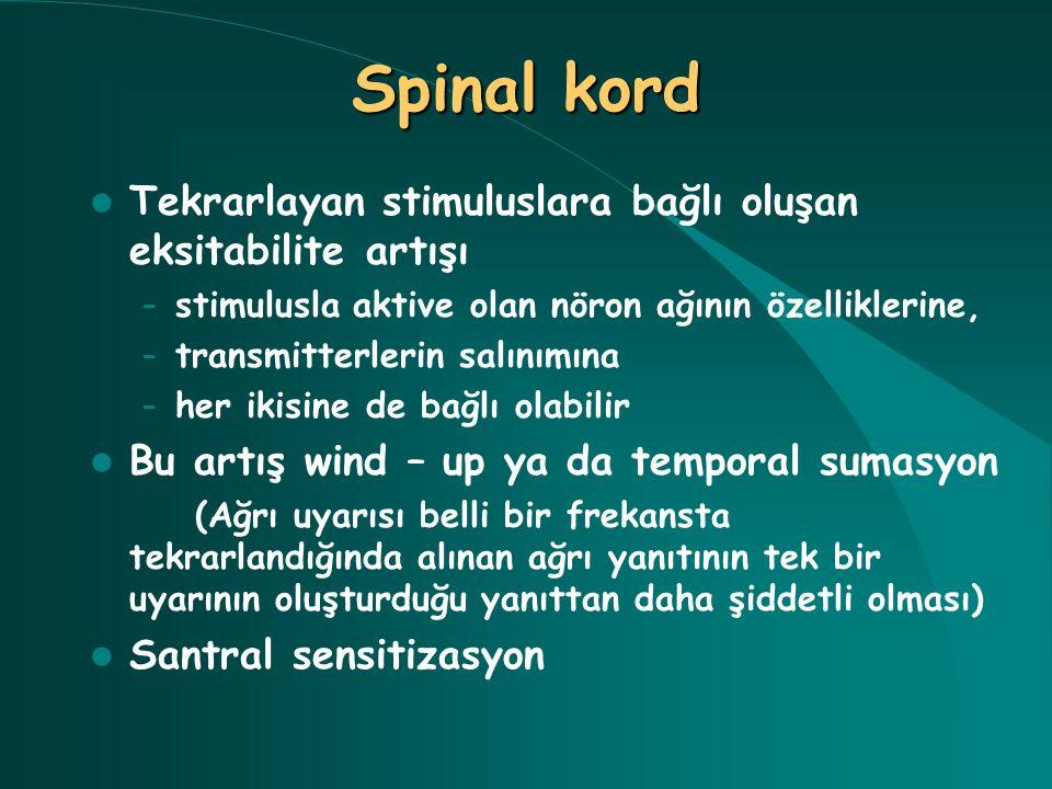 Spinal kord Tekrarlayan stimuluslara bağlı oluşan eksitabilite artışı