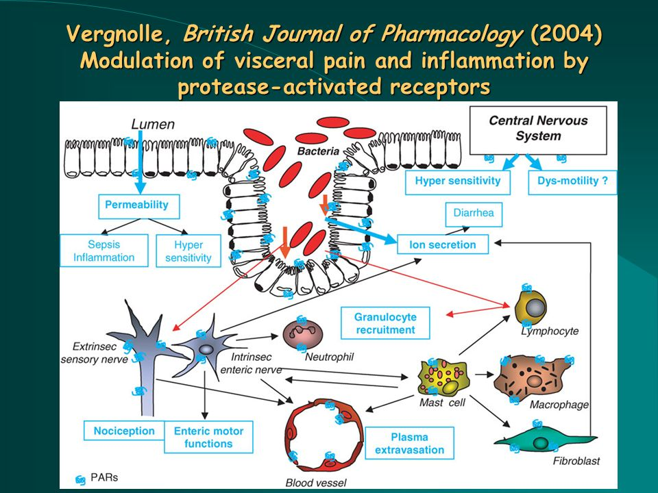 Vergnolle, British Journal of Pharmacology (2004) Modulation of visceral pain and inflammation by protease-activated receptors