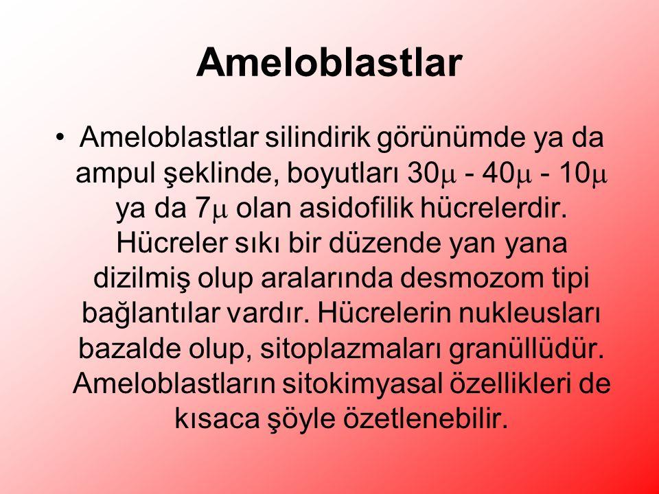 Ameloblastlar
