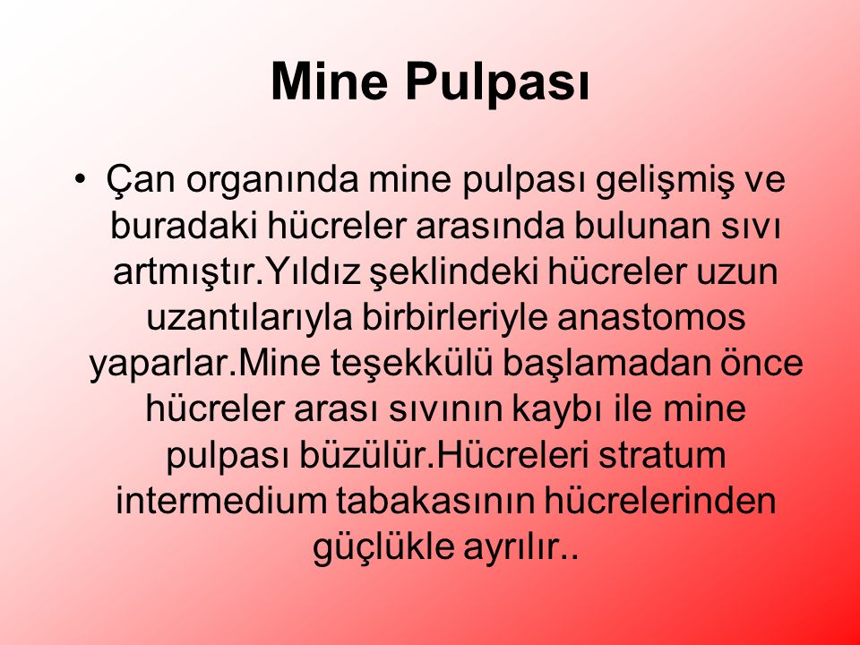 Mine Pulpası