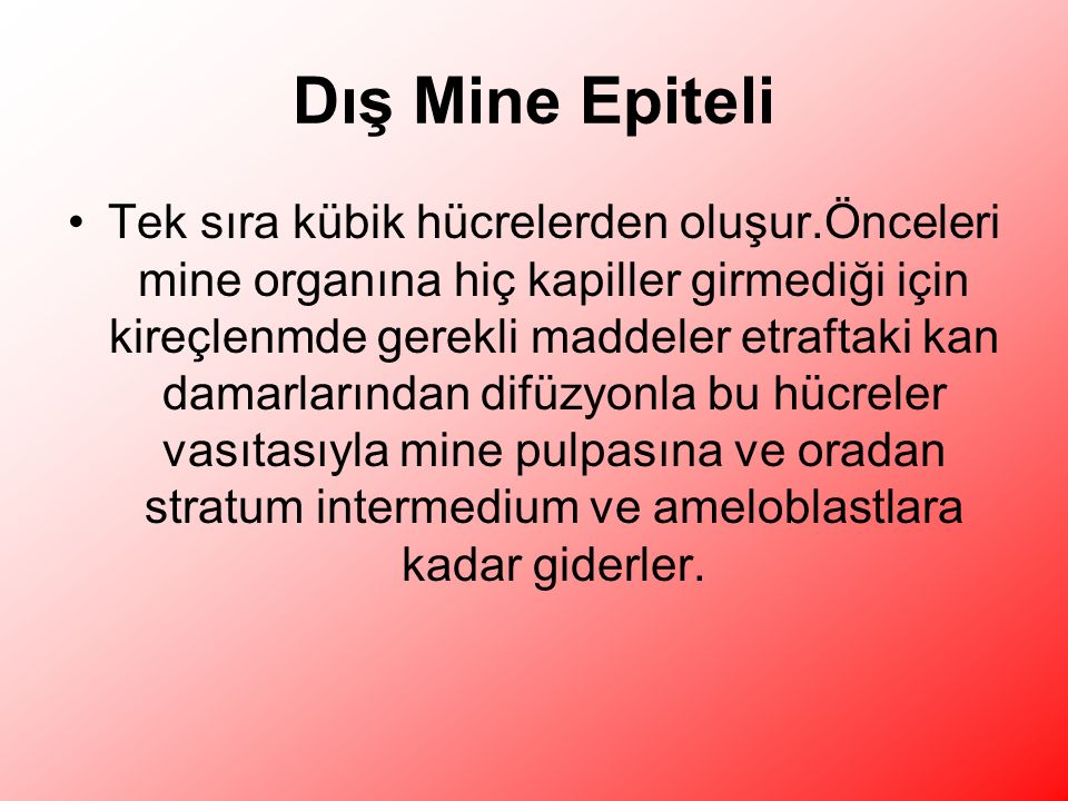 Dış Mine Epiteli