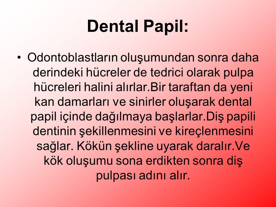 Dental Papil: