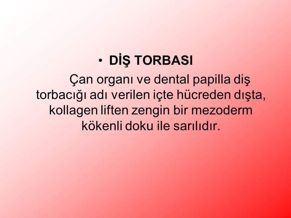 DİŞ TORBASI