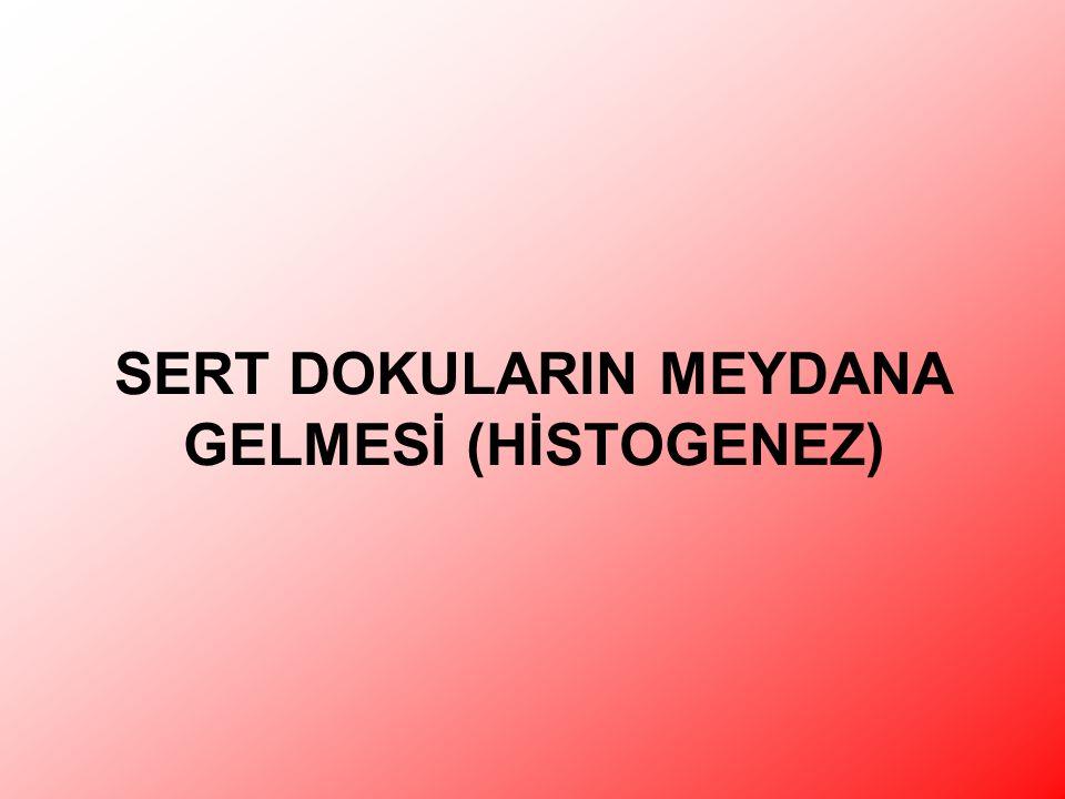 SERT DOKULARIN MEYDANA GELMESİ (HİSTOGENEZ)