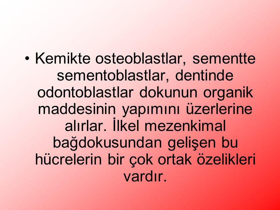 Kemikte osteoblastlar, sementte sementoblastlar, dentinde odontoblastlar dokunun organik maddesinin yapımını üzerlerine alırlar.