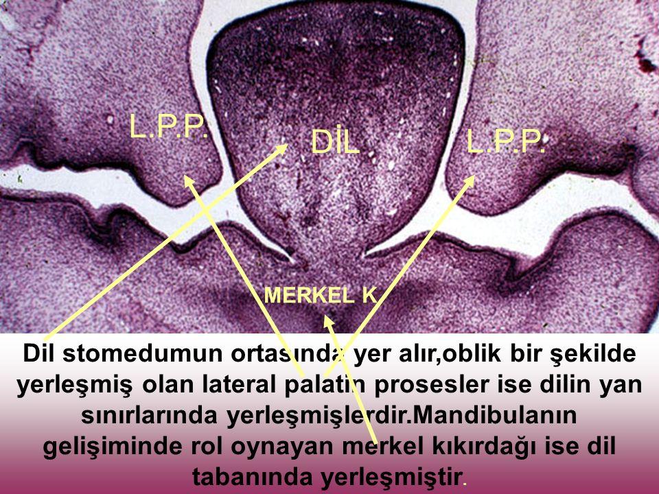 L.P.P. DİL. L.P.P. MERKEL K.