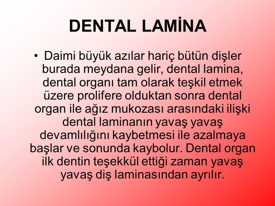 DENTAL LAMİNA