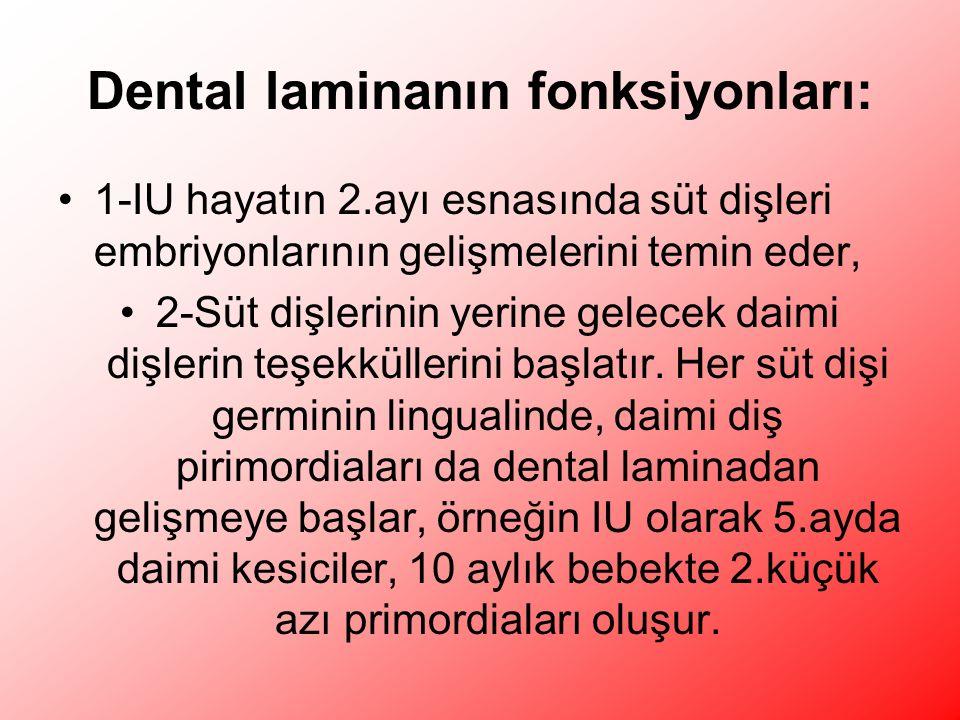 Dental laminanın fonksiyonları: